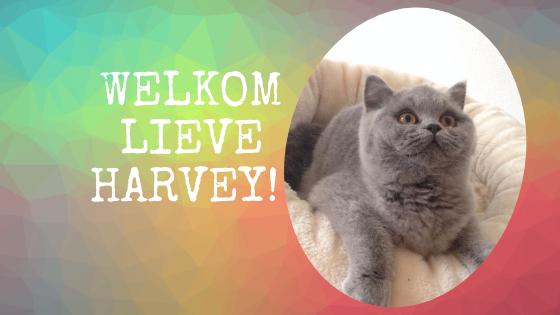 welkom Harvey