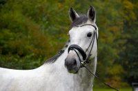workshop paardenfotografie